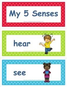 five senses vocabulary cards - children