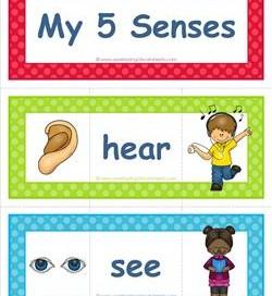 five senses vocabulary cards - matching pieces