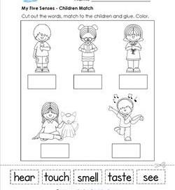 The Senses - The 5 Senses Worksheets, Booklets, & More!