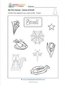 my five senses - sense of smell