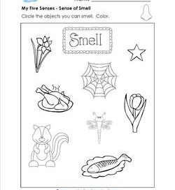 Five Senses Worksheets - Identify & Circle the Objects