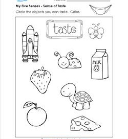 Five Senses Worksheets Identify Amp Circle The Objects