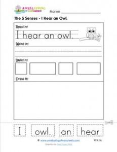 the 5 senses - i hear an owl