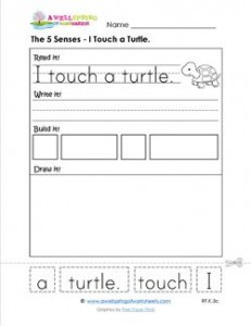the 5 senses - i touch a turtle